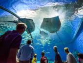 Take a Virtual Field Trip to an Aquarium or Zoo image